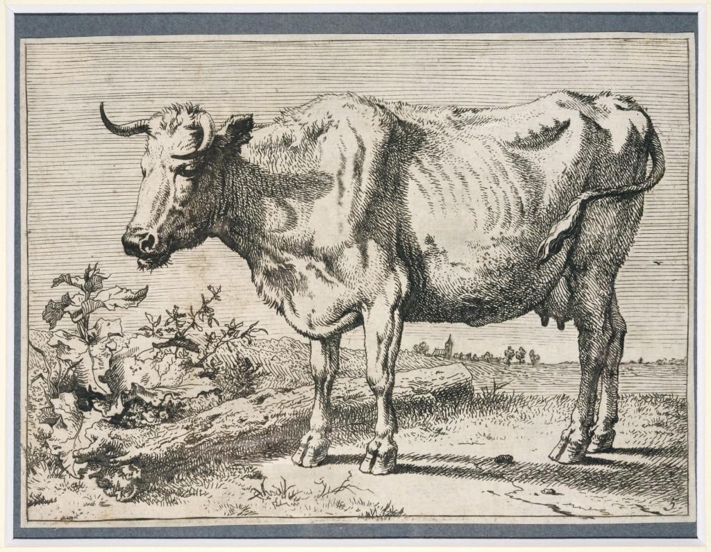 Paulus Potter, een van een serie van acht prenten met stieren, ossen en koeien: het 'Bullenboekje', ets, staat II (3 of 4), 1650, foto Museum Het Rembrandthuis