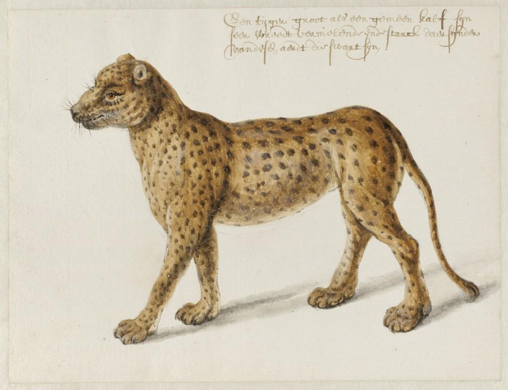 Jaguar, Frans Post (1612-1680), ca. 1638-1644), Noord-Hollands Archief Haarlem