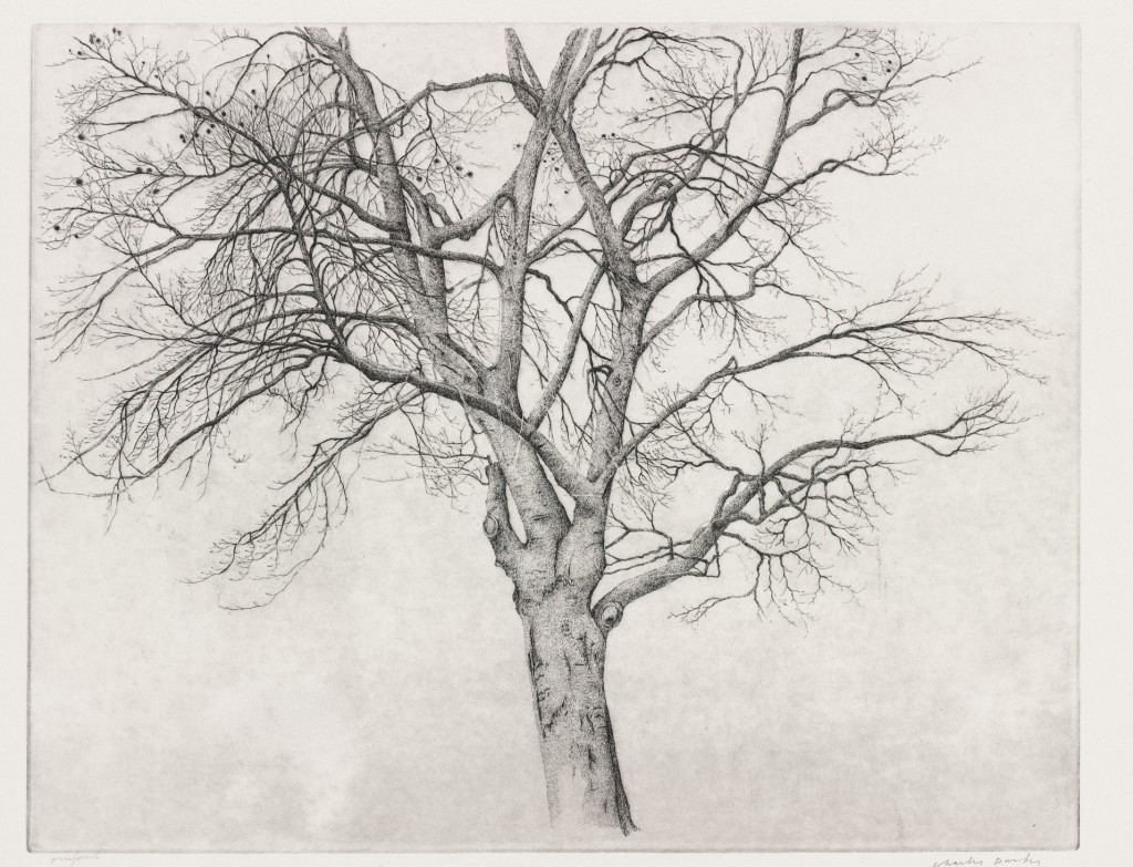 Charles Donker, Kale beukenboom, 1977, ets. staat 4, Amsterdam, Museum Het Rembrandthuis