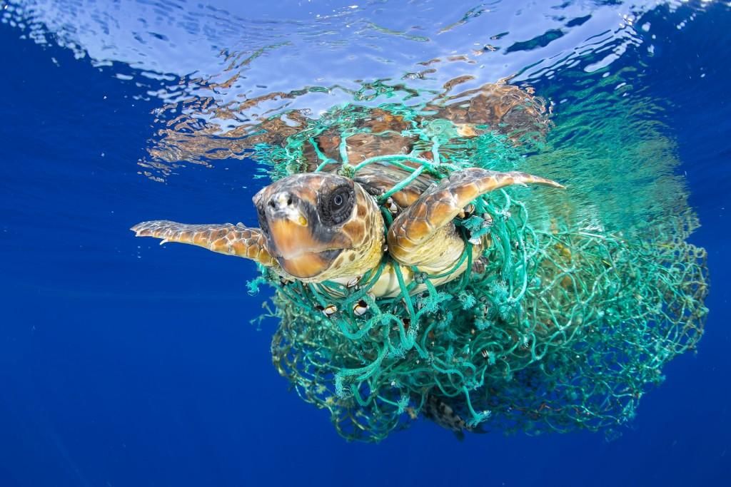 Nature - First Prize Singles, c Francis Perez, Caretta Caretta Trpped. Bij het Canarische eiland Tenerife zwemt een dikkopschildpad verstengeld in een achtergelaten vissersnet. Dikkopschildpadden in het noordoosten van de Atlantische Oceaan zijn geclassificeerd als 'bedreigd'.