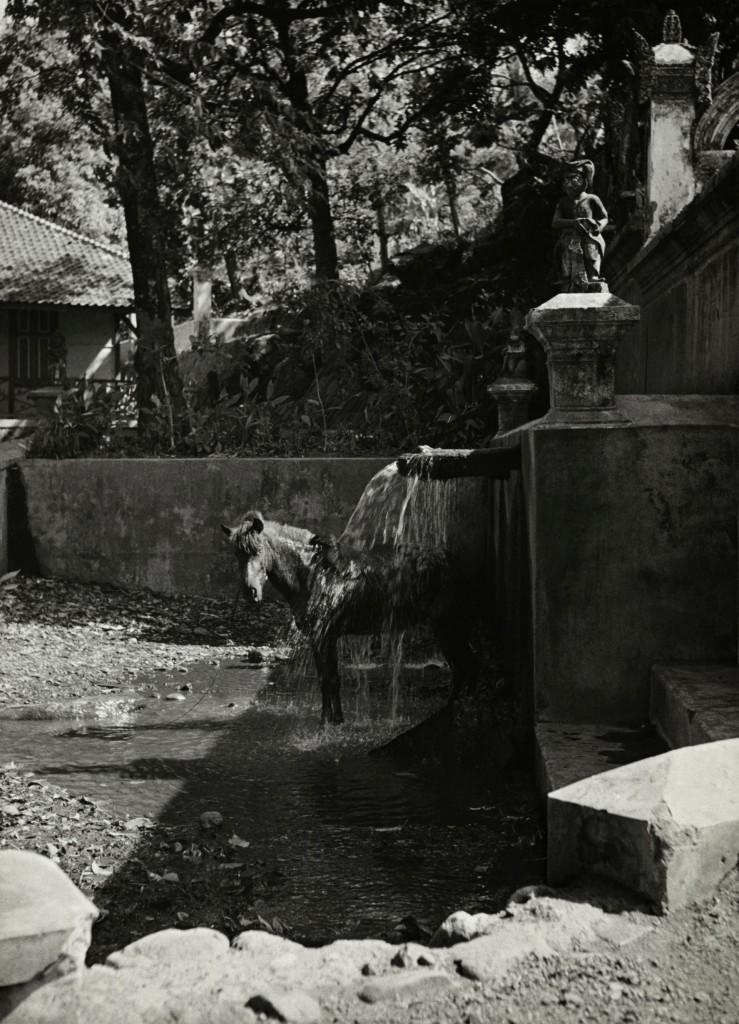 Paard bij een wasplaats, Bali, Indonesië, copyright Alphons Hustinx/Nederlands Fotomuseum