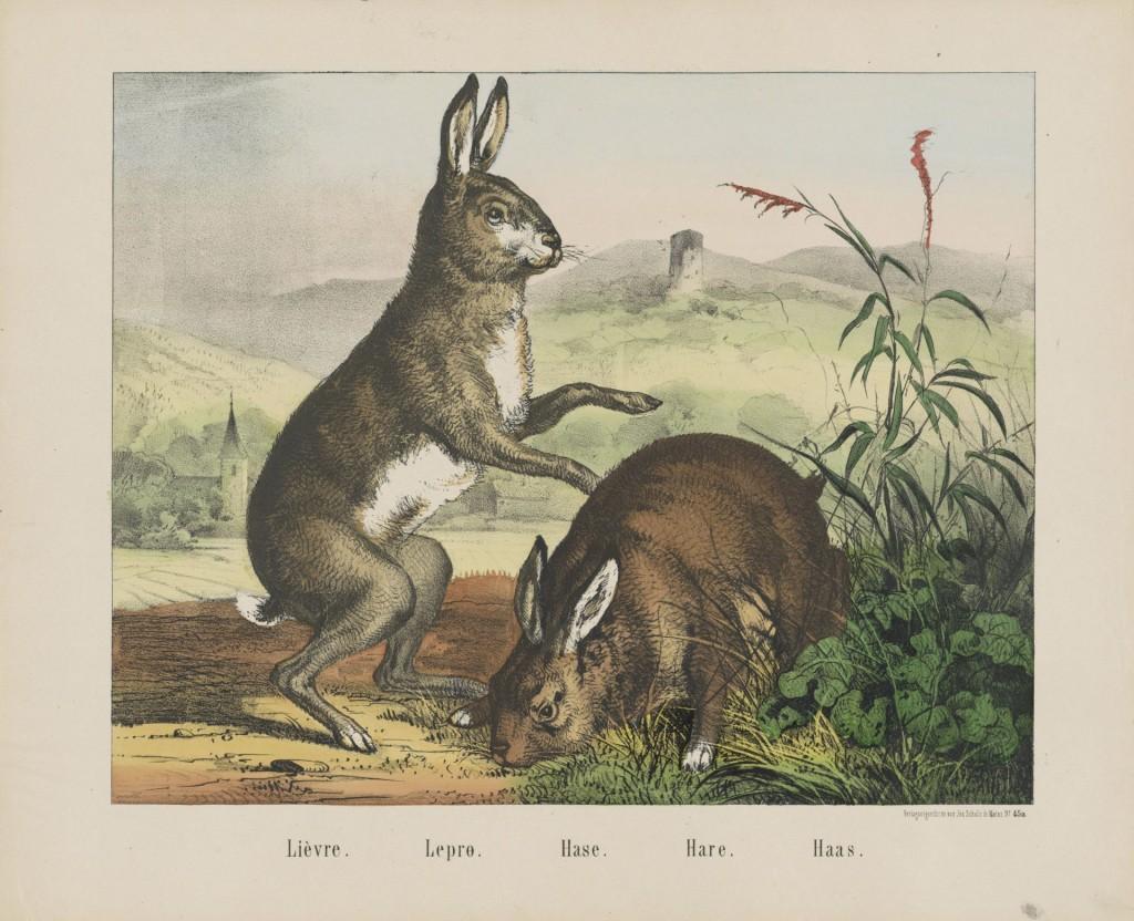 Lièvre/Lepro/Hase/Has, firma Jos. Scholz, 1829 - 1880, lithografie, gekleurd in bruin, geel, blauw en groen, tekst in boekdruk