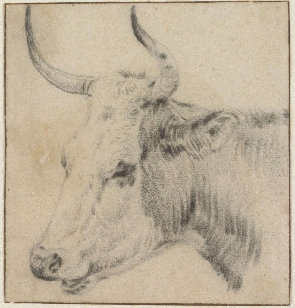 De kop ven een koe, Paulus Potter, 1640-1654, foto Cromhouthuis