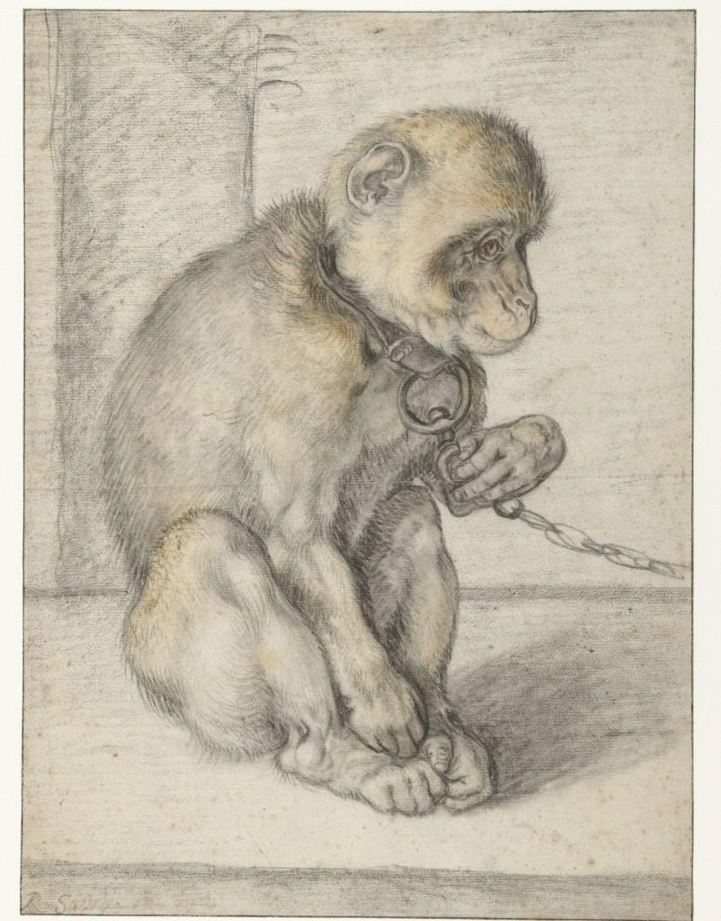 Een zittende aap aan een ketting, Hendrick Goltzius, 1592-1602, foto Cromhouthuis
